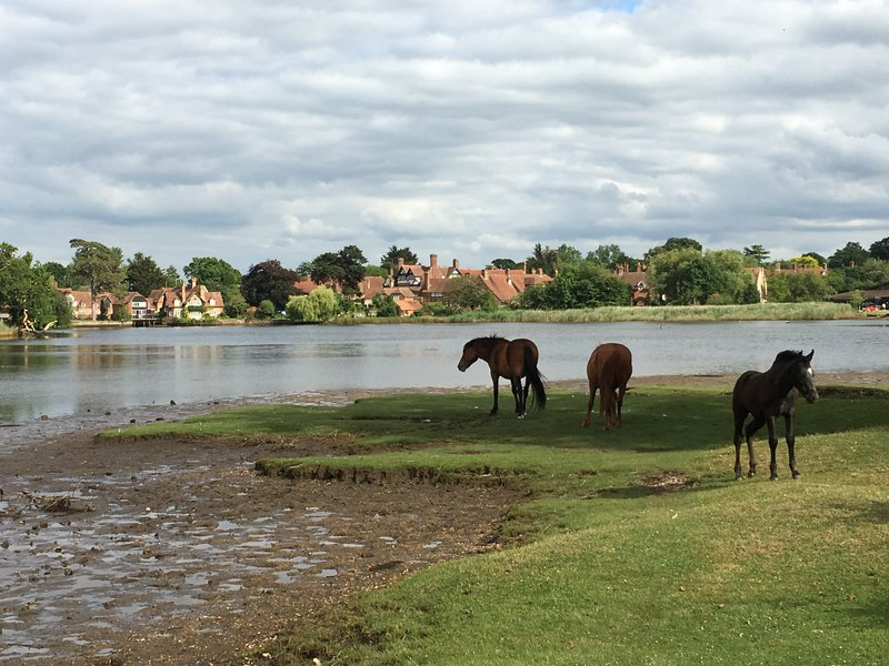 Wild horses near Beaulieu - New Forest