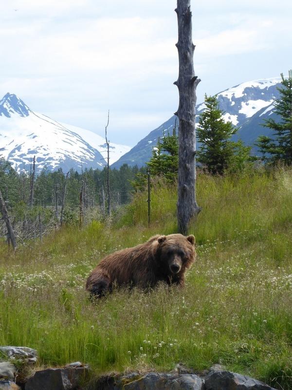 Bear at AWCC