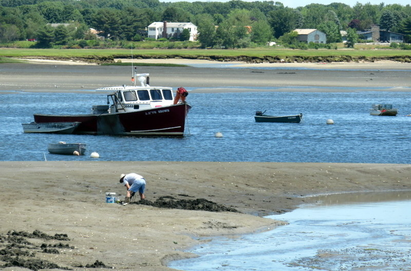 Clamming Nearby the Bait Shack