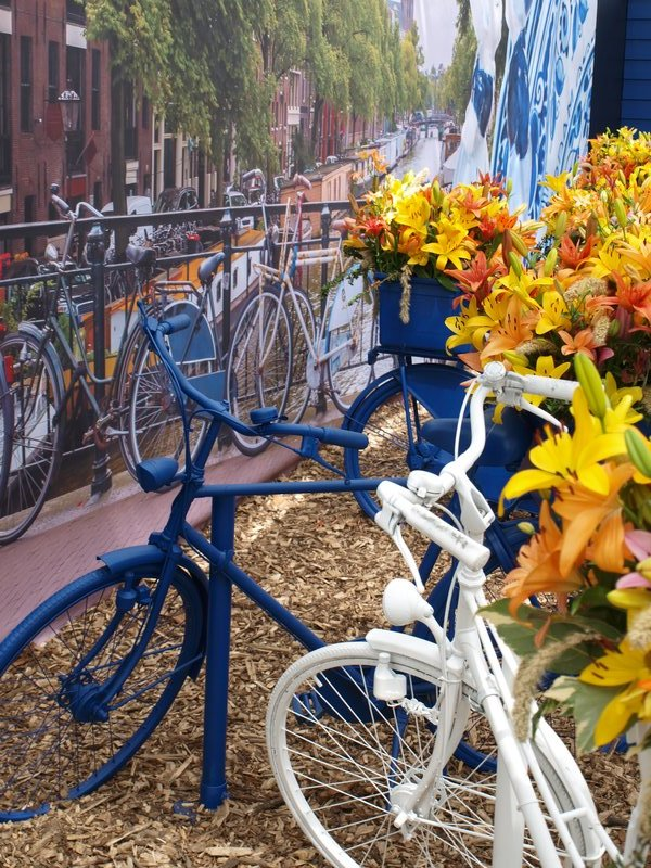 Two bikes (and tulips)