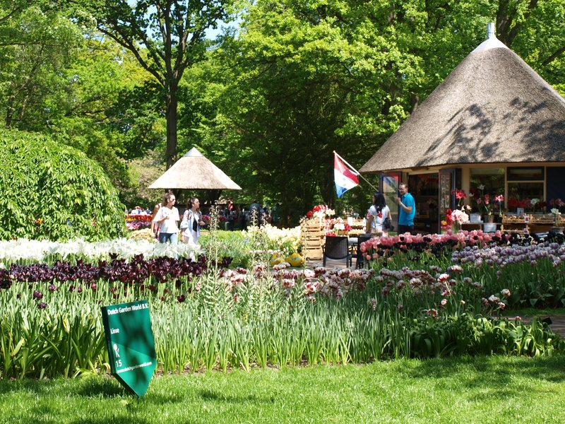 Voorhout (and tulips)