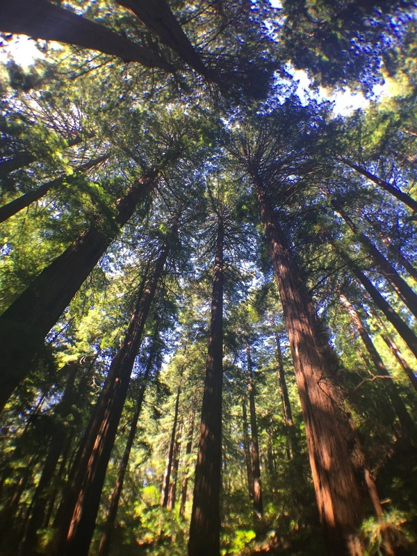 Tall timber!