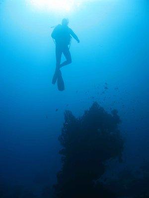CAIRO02_ra..r-coral