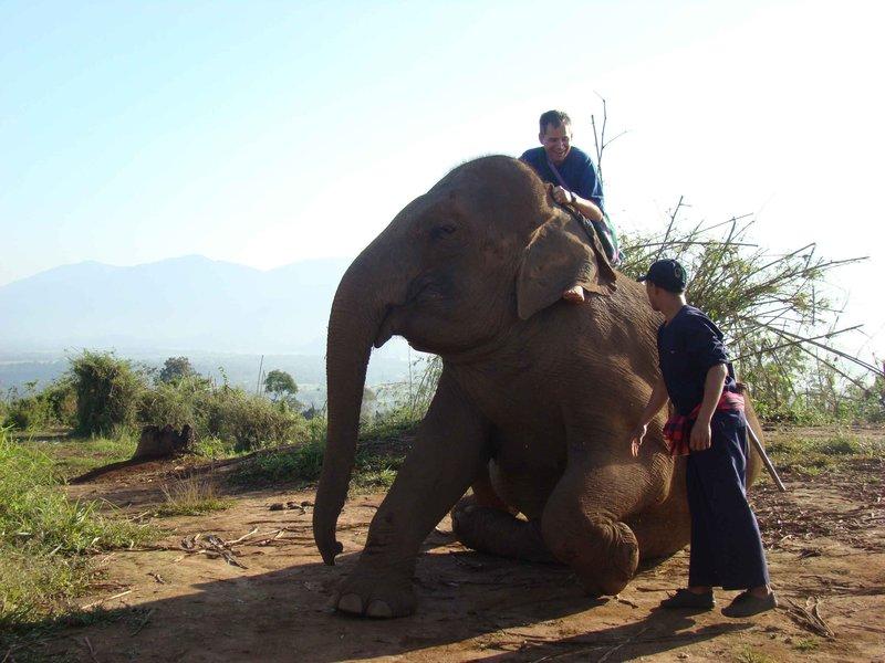 4SGT Elephant rising LT