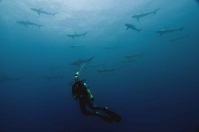Tilde with silky sharks