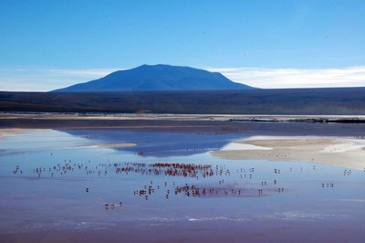 Laguna Colorada with flocks of flamingoes