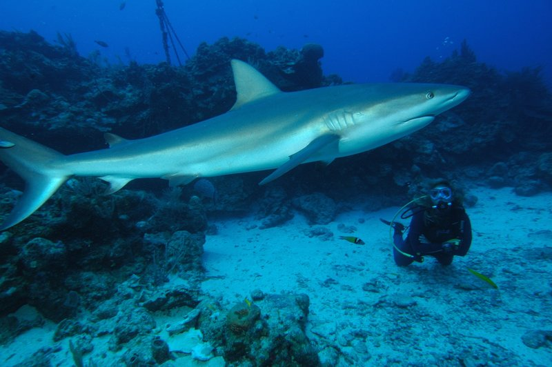 Me with reef shark