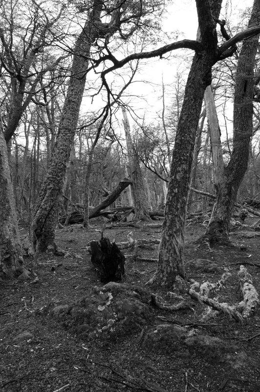 Forest b&w 2