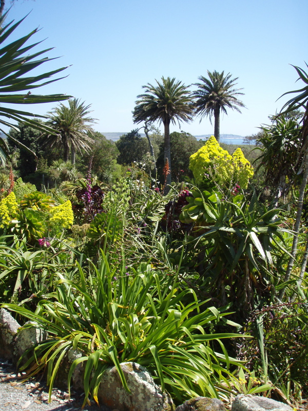 Cornwall - The Isles of Scilly - Some of the Gardens