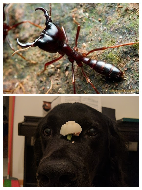 large_ants-COLLAGE.jpg