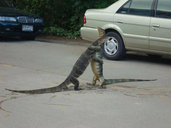 large_monitor-lizard-hugging.jpg