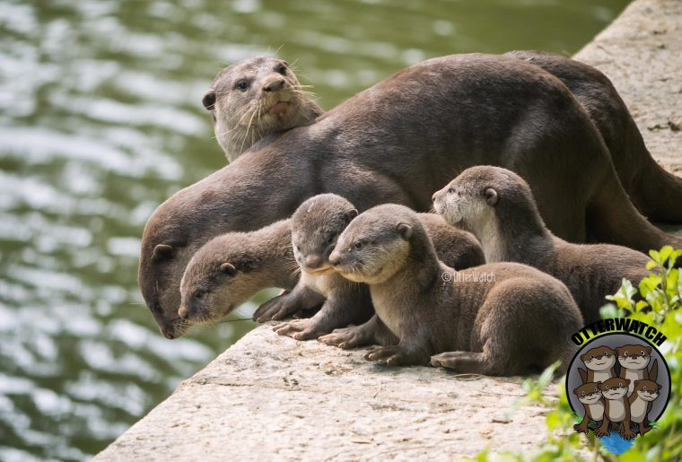 large_otter_babies.jpg