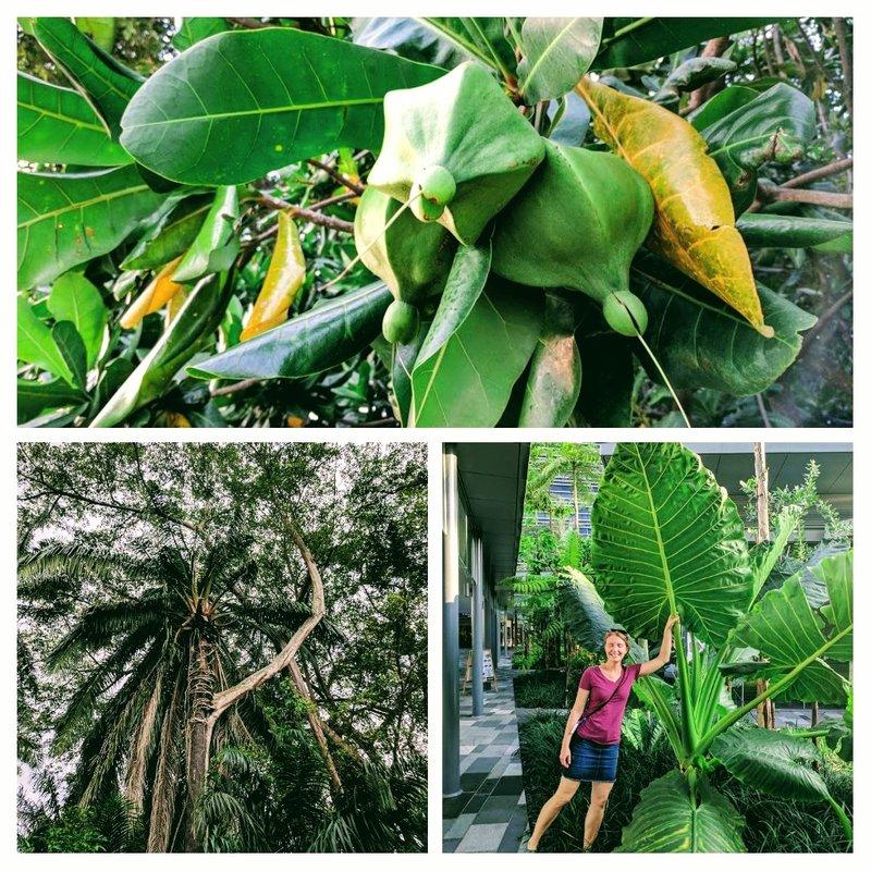 large_plants.jpg