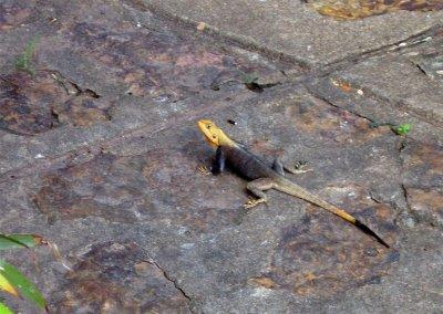 GH5_Lizard..ow_Head.jpg