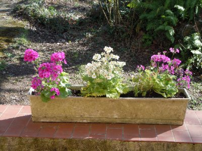 Beautiful flower box