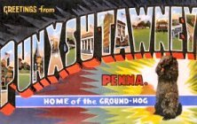 Punxatawney postcard