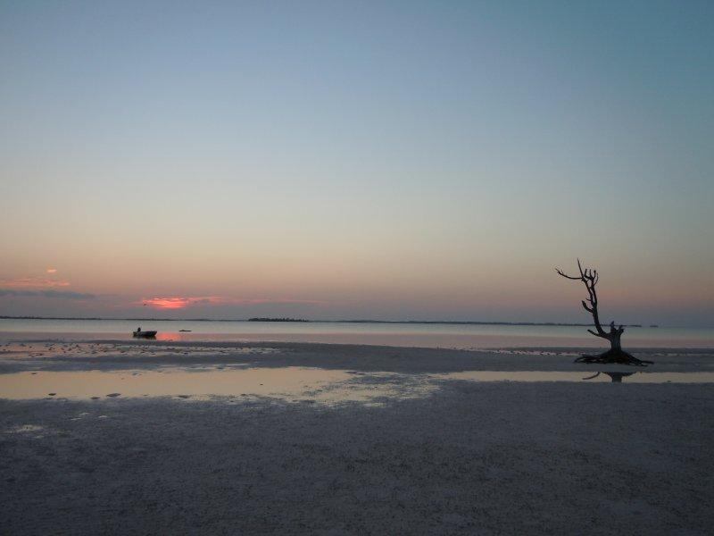 large_Sunset_at_..ne_Tree.jpg