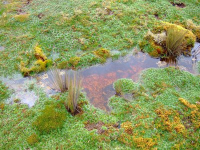 Soggy ground in Cajas