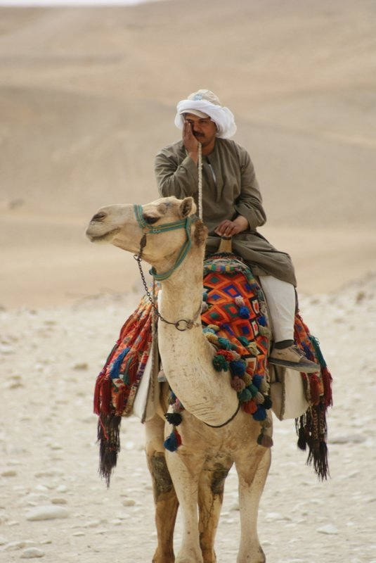 Bored camel guy, Giza