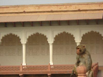 Agra_014.jpg