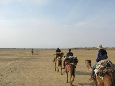 Camel_Safari_017.jpg