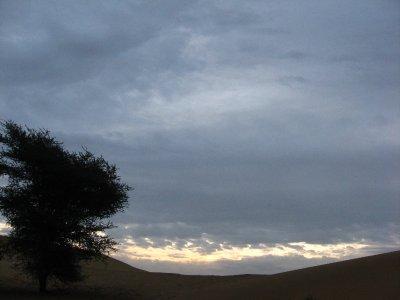 Camel_Safari_093.jpg