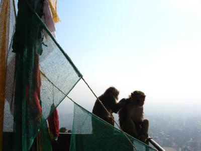 Monkey Temple 003