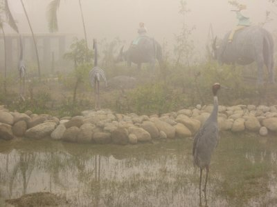 Pond with Live Crane