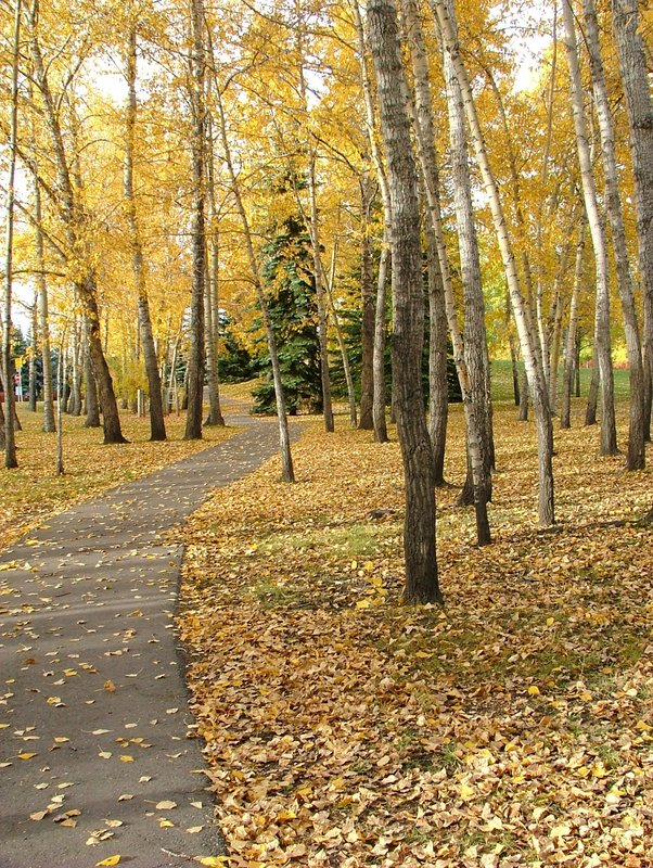 Autumn in Calgary a