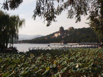 China_310.jpg