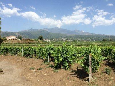 Vineyards in the Etna hinterland