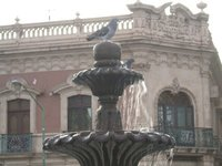 Pigeon at square in downtown Chihuahua