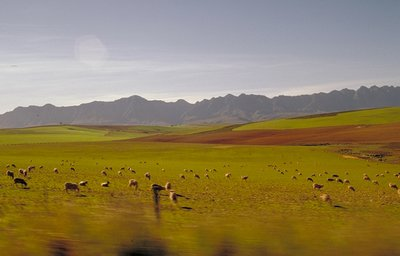 Farmland in the cape province