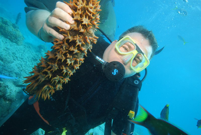 Driving at the reef - sea cucumber