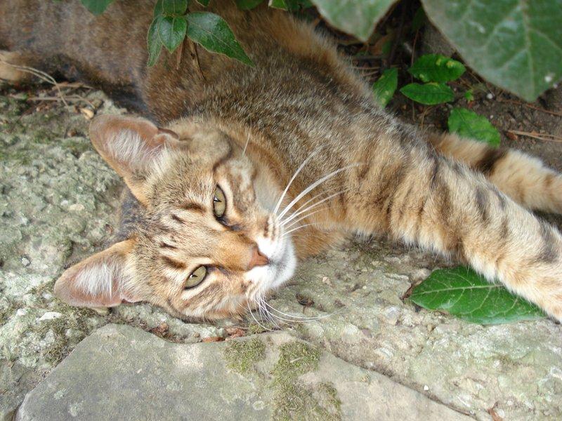 Boboli Gardens cat