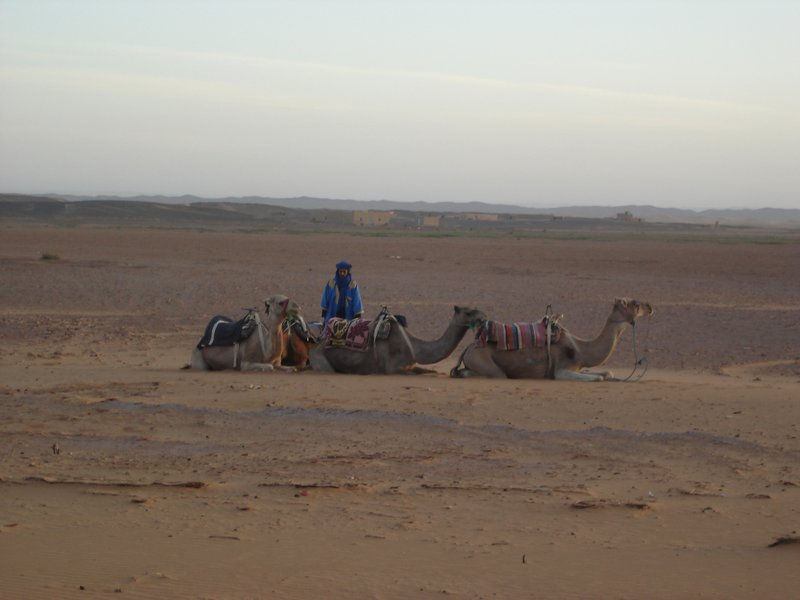 "Our ""Camel Man"" Awaits"