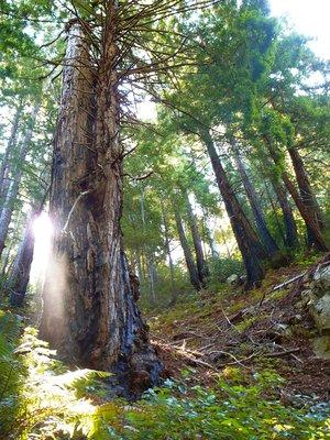 Fantastic forest