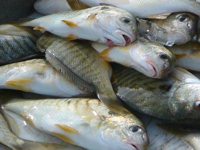 Sad fishes