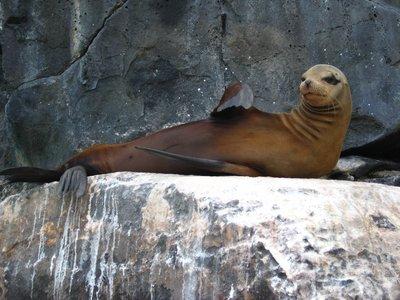Sea Lion chilling