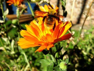 Bariloche - Bee