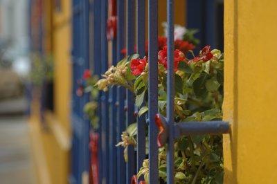 Flores en el Invierno