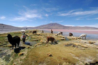 Laguna Colarada, Bolivia