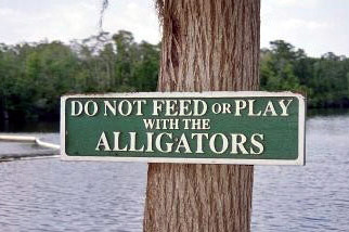 Dont Feed the Alligators