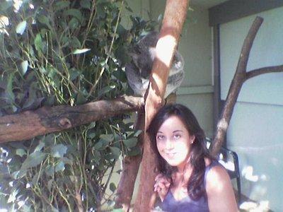 1st koala i met