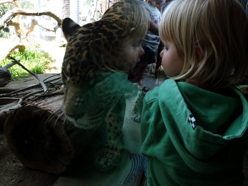 May and the Jaguar