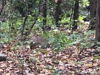 Deer hiding in undergrowth