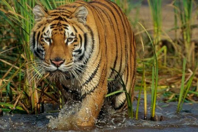 Sundarbans.png
