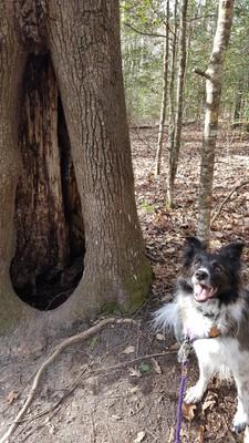 CongareeSquirrel.jpg