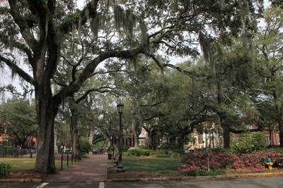 SavannahSidewalk.JPG