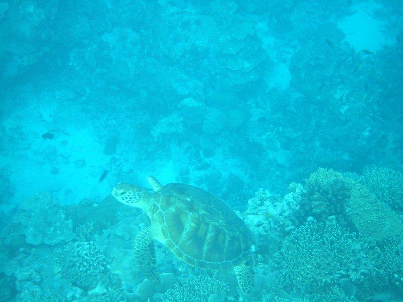 My turtle!